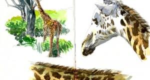 Carnet de Voyages di Roberto Malfatti KENYA 3