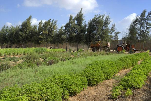 El Adleya farm 05