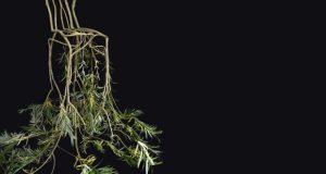 Come far crescere una sedia – design eco friendly – di Carlo Gibiino